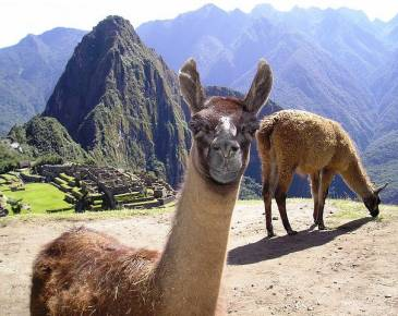 5 D�as - 4 Noches: Arica - Cusco - Machu Picchu - Arica,, Opci�n 3